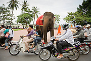 04 JULY 2006 - PHNOM PENH, CAMBODIA: An elephant prepares to cross the street on Sisowath Quay, the main riverfront boulevard in Phnom Penh, Cambodia.   Photo by Jack Kurtz / ZUMA Press