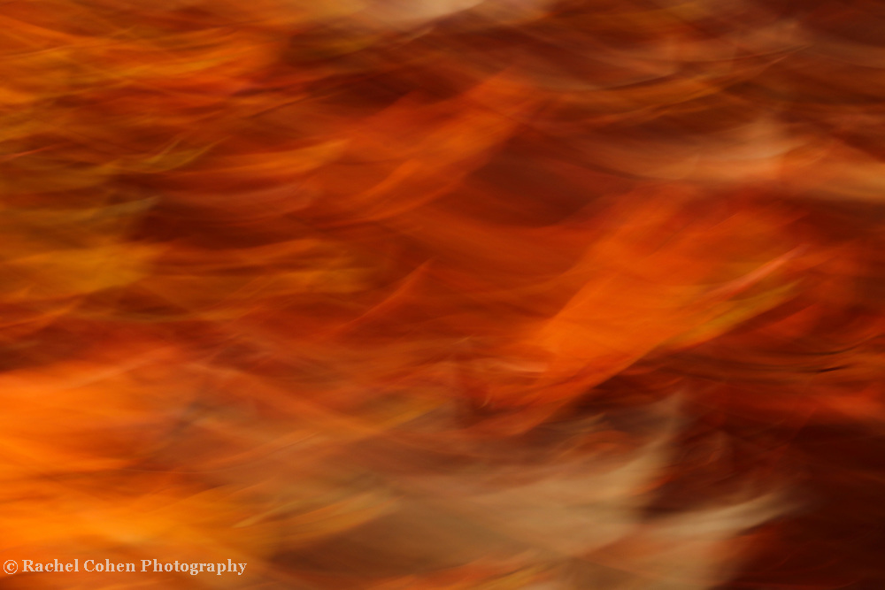 &quot;Sweet Potato Mash&quot; <br /> <br /> Enjoy the wonderful warm fall hues in this flaming abstract!