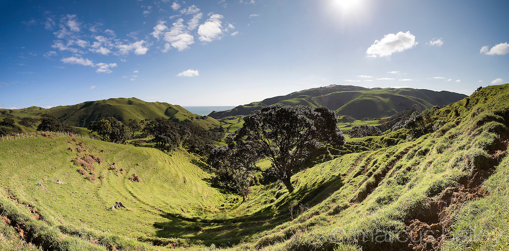 rolling hills and green fields dominate this ideallic rural landscape, just south of Auckland, New Zealand
