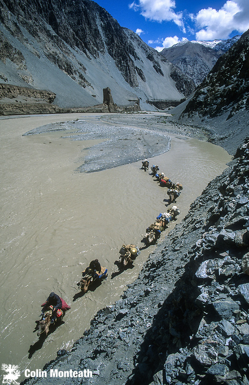 Bactrian camel caravan crosses braided  rivers, Aghil range, Chongtar expedition 1994, Karakoram mtns, far western China, Central Asia.