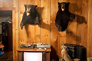 Robbie Grumbles' living room is full of stuffed game, including three mounted bears. Robbie Grumbles has three live bears he has raised since they were cubs on his property in Travelers Rest, South Carolina September 30, 2010. Mr. Grumbles uses these bears to train his dogs and other dog owners how to bear hunt safely.