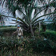 Un produttore di ananas, anche lui ha deciso di abbandonare la coltivazione della foglia di coca.<br />