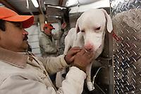 HUNTERS PREPARING DOGS FOR QUAIL HUNTING