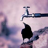 Ave nao identificada, Massada, Israel, 00/00/1983 foto de Ze Paiva/Vista Imagens