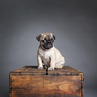 Boston pet photographer specializing in dog and cat photography.