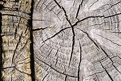 Cut section of a tree trunk showing cracks and tree rings
