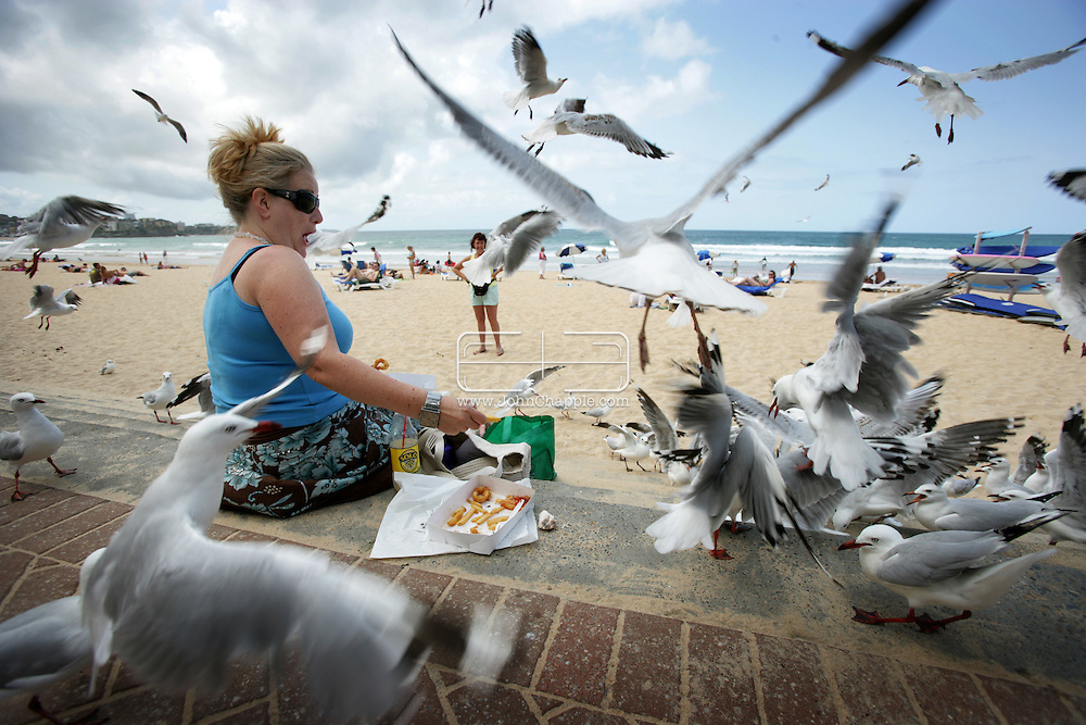 8th February 2007. Sydney, NSW. Siobhan O'Gorman is overwhelmed by seagulls on Manly beach, as she tries to eat her lunch. In a hope to solve the problem there are plans to introduce birds of prey to the busy area. PHOTO © JOHN CHAPPLE / REBEL IMAGES..tel 310 570 9100.john@chapple.biz.www.chapple.biz..