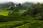 TEA - Malaysia, Sri Lanka, Vietnam and India