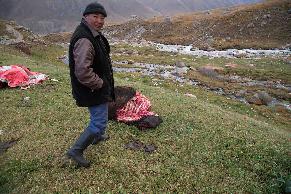 Nurdin Orozaliev walks toward the carcass of a cow killed by wolves after it was accidentally left out over night on the lower flanks of Chok-Tal, a 15-thousand-foot peak in the Chon Kemin Valley. In the background the Dzhendisu, or Crazy Water River, rushes downhill.