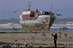 """BLANKENBERGE, BELGIUM - NOVEMBER 9, 2001 - Tourists feed seagulls on the beach at Blankenberge, seemingly oblivious to the beached cargo ship in the background. The German cargo ship """"Heinrich Behrmann"""", was beached by heavy seas after losing power to the main engine late Thursday night at Blankenberge. The ship was heading for the port at Zeebrugge from Ireland, and was carrying dry cargo, none of which was hazardous. The salvage company Unie Van Redding - En Sleepdienst N.V. was hired to free the ship. Three unsuccessful attempts were made Friday, the second attempt resulted in the injury of two workers when tug boat cables snapped. The beached ship has attracted the attention of curious tourists. (Photo © Jock Fistick)"""