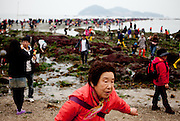 "Visitors at the open ""Mysterious Sea Road"" at Hoedong shore (Jindo island). Jindo is the 3rd biggest island in South Korea located in the South-West end of the country and famous for the ""Mysterious Sea Route"" or ""Moses Miracle"". Every spring thousands flock to the shores of Jindo to walk the mysterious route that stretches roughly three kilometers from Hoedong to the distant island of Modo. Materializing from the rise and fall of the tides, the divide can reach as wide as forty meters."