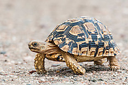 Tortoises, Terrapins and Turtles
