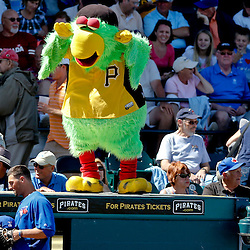 Mar 13, 2013; Bradenton, FL, USA; Pittsburgh Pirates mascot Parrot taunts Toronto Blue Jays outfielder Kevin Pillar during the seventh inning of a spring training game at McKechnie Field. Mandatory Credit: Derick E. Hingle-USA TODAY Sports