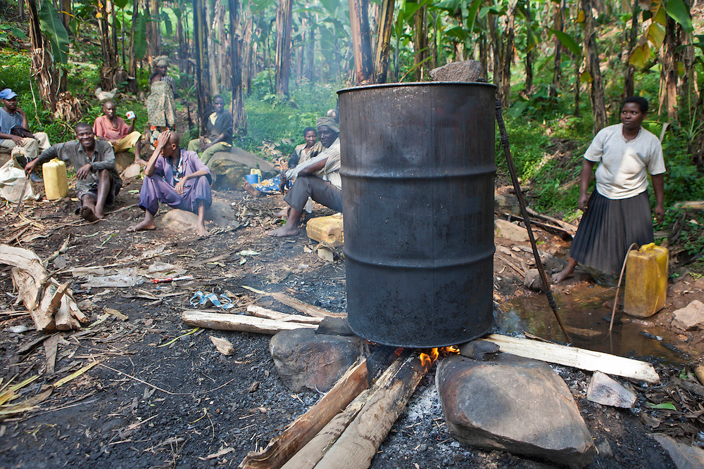 Batwa tribes people fermenting the plantains to make plantain wine and whiskey on the edge of the Bwindi Impenetrable Forest, Uganda.