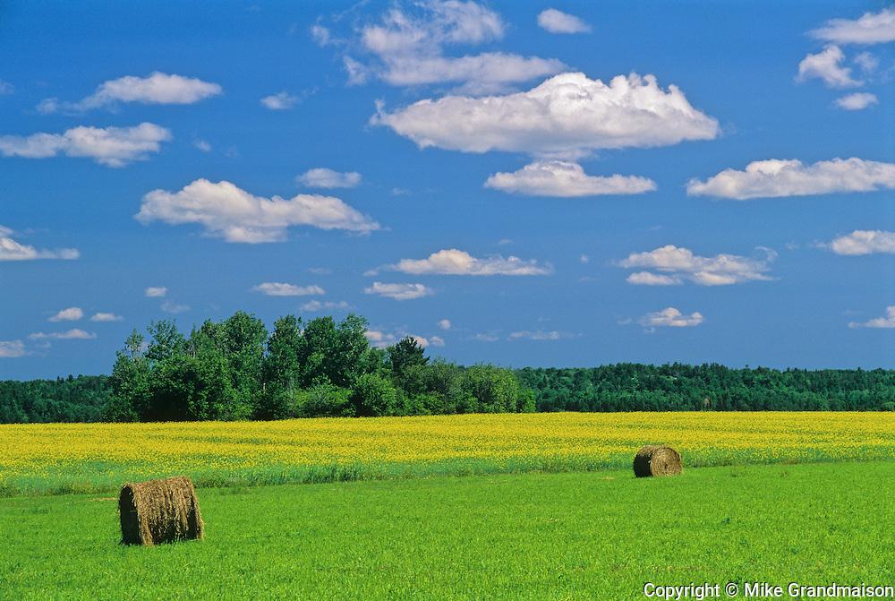 Bales, canola nd clouds<br /> Verner<br /> Ontario<br /> Canada