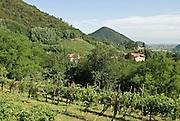 Italien, Euganeische Hügel bei Padua, Landschaft mit Hügeln und Weinbergen.. ..Italy, Colli Euganei, landscape with hills and vineyards