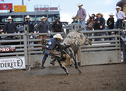 Bud Williamson from Queensland, Australia falls after being knocked unconscious while still on Ferdinand in the second round of Wednesday's 2013 PBR Touring Pro Division event at the Salinas Sports Complex.