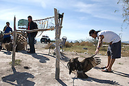 NEWS&GUIDE PHOTO / PRICE CHAMBERS.Juan Carlos Morales and the others inspect a makeshift pet store on the side of a Mexican highway. Eagles and other birds are held captive and sold next to snake skins and other unique merchandise. Cesar says they're meant to be pets, not dinner although a mile down the road a sign asks people not to buy these illegally captured animals.