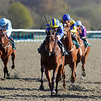 Lingfield 20th April