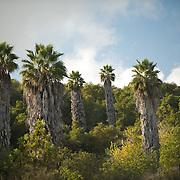 Eden Hills