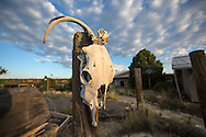 Skull on the Schreiber's ranch in Blanco, New Mexico.