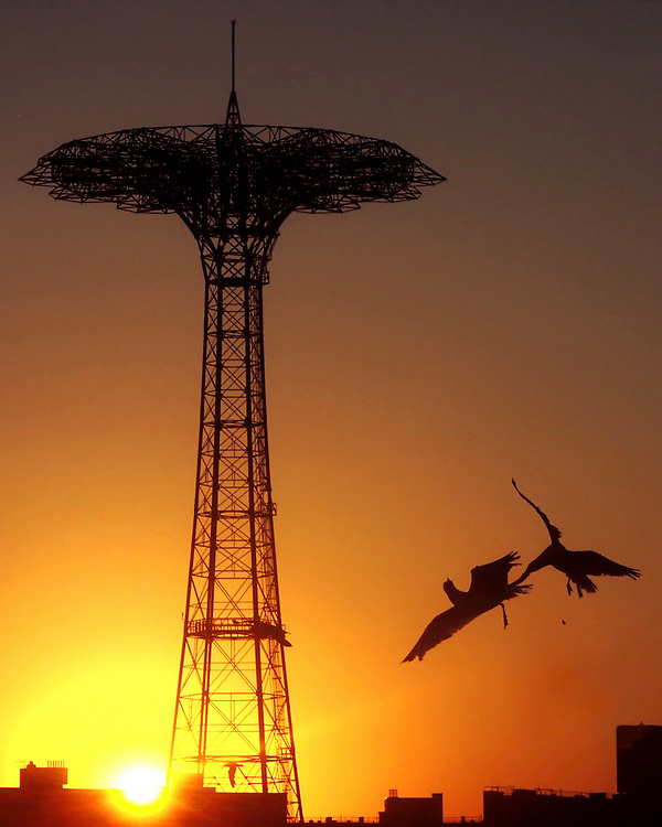 War of the Wings. These two gulls are fighting over a piece of food as the sun sets behind them near the old Parachute Jump.