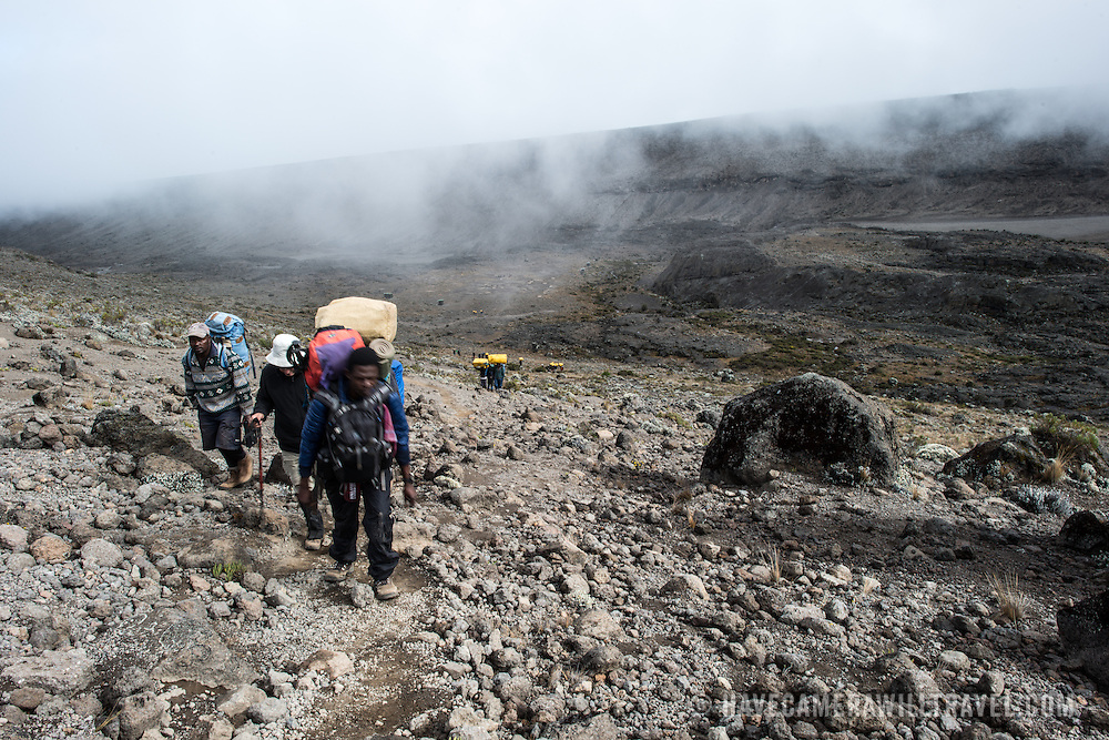 Porters on the trail between Moir Hut Camp (13,660 feet) and Lava Tower (15,215 feet) on Mt Kilimanjaro's Lemosho Route. At this elevation, the heath zone (moorland) gives way to rocky alpine desert.