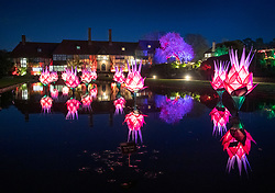 © Licensed to London News Pictures. 30/11/2018. London, UK. Brightly lit lotus flowers line the pond at RHS Wisley Gardens. Trees and plants have been illuminated at Royal Horticulture Society Wisley Gardens for the Christmas Glow seasonal event. Hundreds of different lights can be seen when following the trail throughout the gardens opening 1 December 2018 2 January 2019. Photo credit: Peter Macdiarmid/LNP