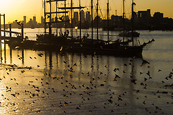 Woolwich, London, September 14th 2016. A flock of starlings speed past the mud banks as he sun sets behind the skyscrapers of Docklands and the Tall ships gathered for the Sail Greenwich Festival 2016 on the River Thames at Woolwich.  &copy;Paul Davey<br /> FOR LICENCING CONTACT: Paul Davey +44 (0) 7966 016 296 paul@pauldaveycreative.co.uk