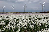 Petten tussen de duinen en Noordhollandsch Kanaal