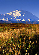 Autumn grasses and McKinley