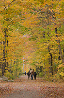Unpaved road framed by golden fall foliage, Groton Woods, Vermont