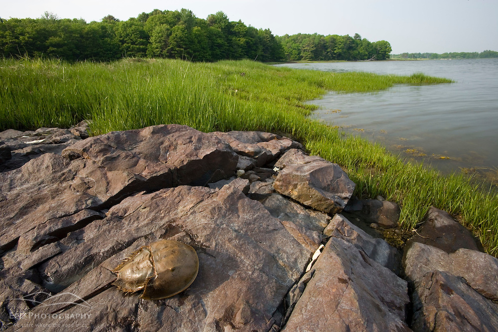A tidal marsh in Marquoit Bay, Brunswick, Maine.