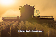 63801-07105 Farmer harvesting soybeans at sunset, Marion Co., IL