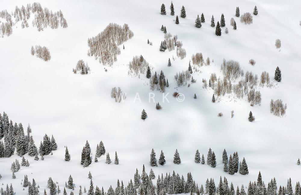 Trees in fresh snow, Gunnison County, Colorado.  April 2014