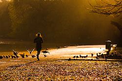Regent's Park, London, November 4th 2014. A runner heads towards the rising sun on London's Regents Park.