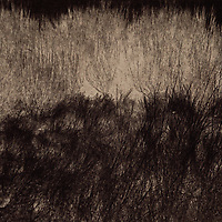 An abstract scene with meadow and bush was created by using an alternative photographic process caled vandyke.
