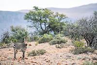 Mount Camdeboo, Eastern Cape, South Africa