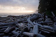 West Coast Trail - Day 2.  Log jams fill the beach at sunset.
