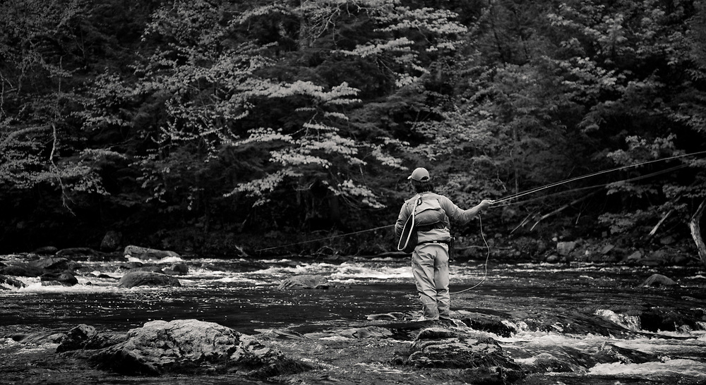 Male angler casting while fly fishing on the West Branch of the Ausable River in the Adirondacks, New York State.