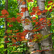 """Flicker of Autumn""<br />