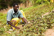 Oumar Diedhiou, 22, weeds a roselle (locally known as bissap) patch in his field near the village of Badiana, Senegal on Saturday May 29, 2010.