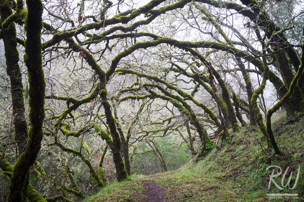 Tree-Lined Hiking Trail, Cascade Canyon Open Space Preserve, Marin County, California