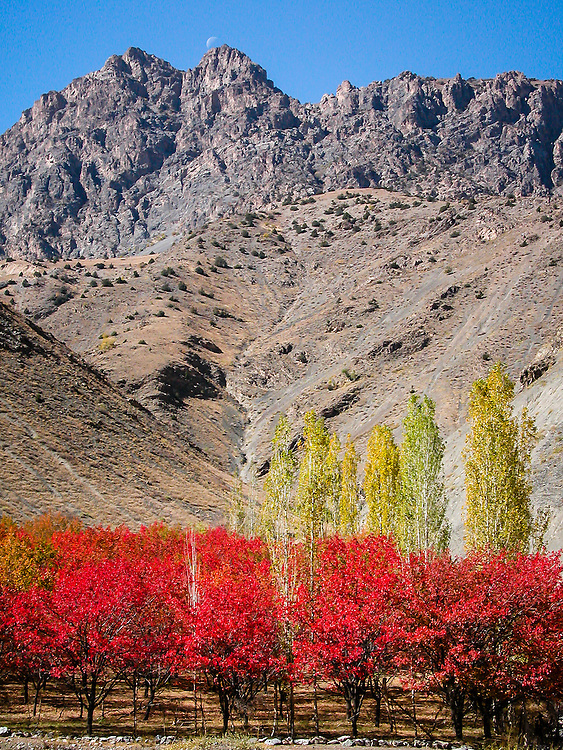 Stock photograph of crop trees in autumn beneath a mountain range in western Tajikistan