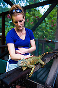 Tourist with an iguana at the Iguana Conservation Project in San Ignacio, Belize.  This facility helps boost the wild population by releasing healthy young at appropriate times.