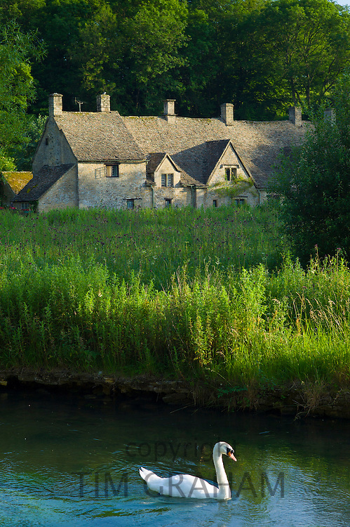 Swan on River Coln by Arlington Row cottages traditional almshouses in Bibury, Gloucestershire in The Cotswolds, UK