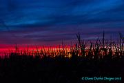 20180810_cornfield_sunset_kirksway_diane_duthie_designs_
