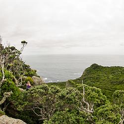 Aorangi, Poor Knights Islands