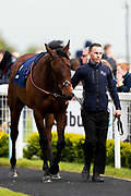 Entertaining ridden by Sean Levey and trained by Richard Hannon in the F45 Bath Training Guaranteed Results Handicap race.  - Ryan Hiscott/JMP - 06/05/2019 - PR - Bath Racecourse- Bath, England - Kids Takeover Day - Monday 6th April 2019