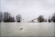 Nederland, The Netherlands, Nijmegen, 29-1-2018 Opnieuw is er een golf hoogwater die via de Rijn en Waal ons land passeert op weg naar zee. Het water is iets minder hoog als twee weken geleden. Zicht op het onbereikbare voetgangersbruggetje Ooyblik richting Ooypolder . Foto: Flip Franssen